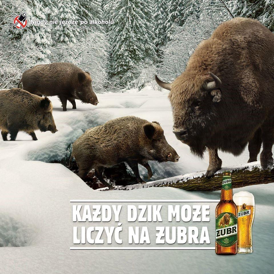 reklama żubra